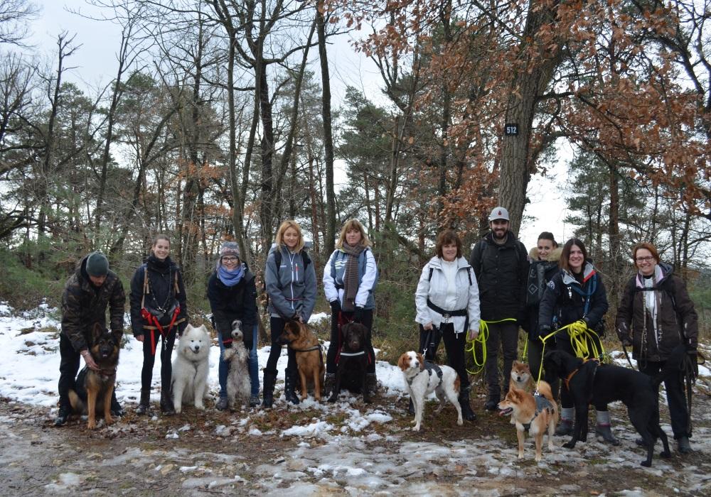 Cani rando Foret Fontainebleau