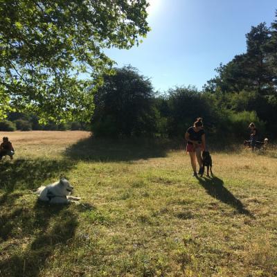 Dressage chien groupe