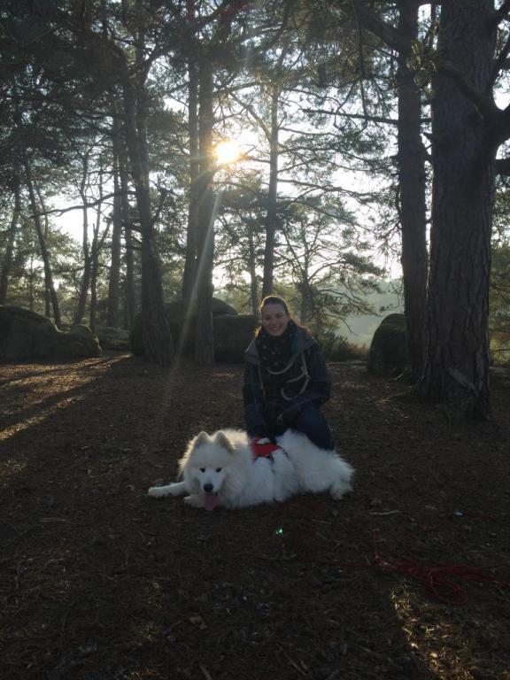 Cani rando avec Leïka