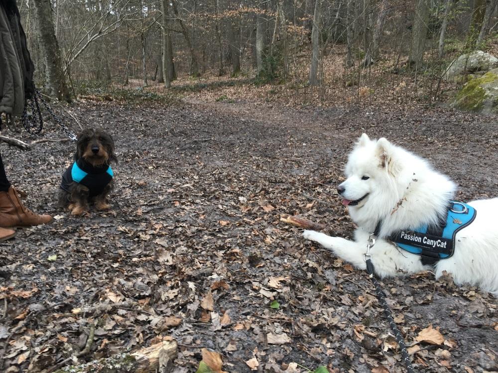 Leika et Marley