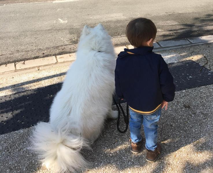 Enfant et samoyede