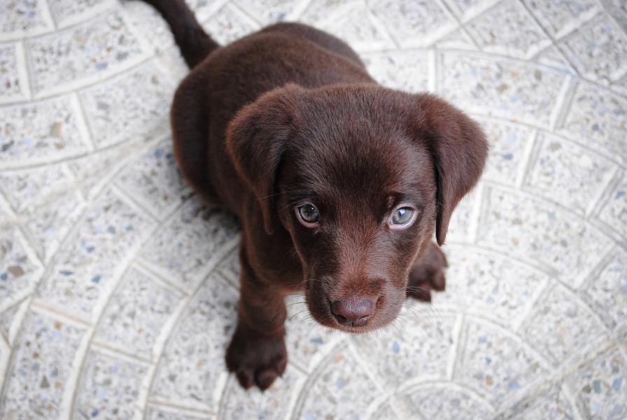Puppy 1082141 1920