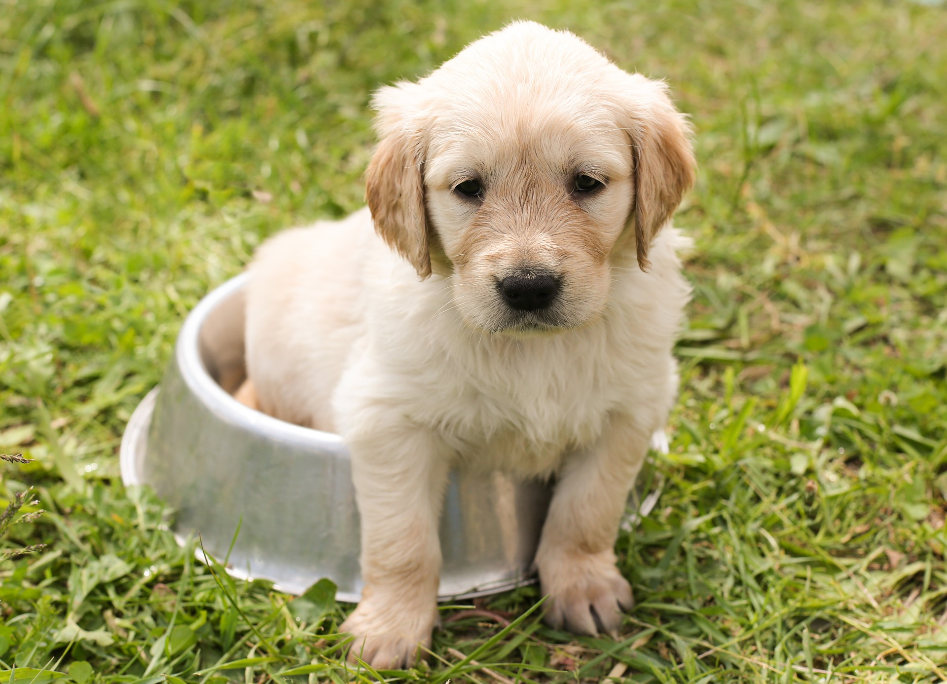 Puppy 1207816 1920